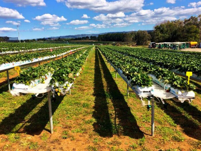 stothart family farms
