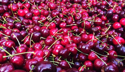 【タスマニア】優良REID FRUITSのチェリーソーティングレビュー
